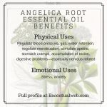 physical and emotional benefits of angelica root oil