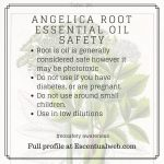 angelica essential oil safety