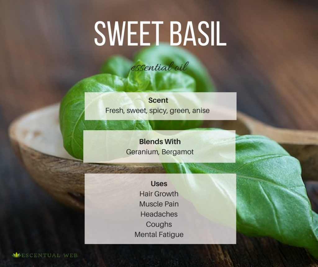 Sweet Basil essential oil scent and uses