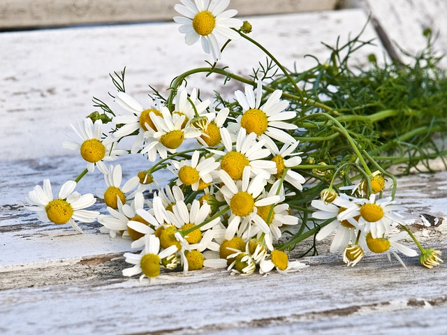 chamomile flowers essential oil