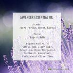 Lavender Essential Oil Profile
