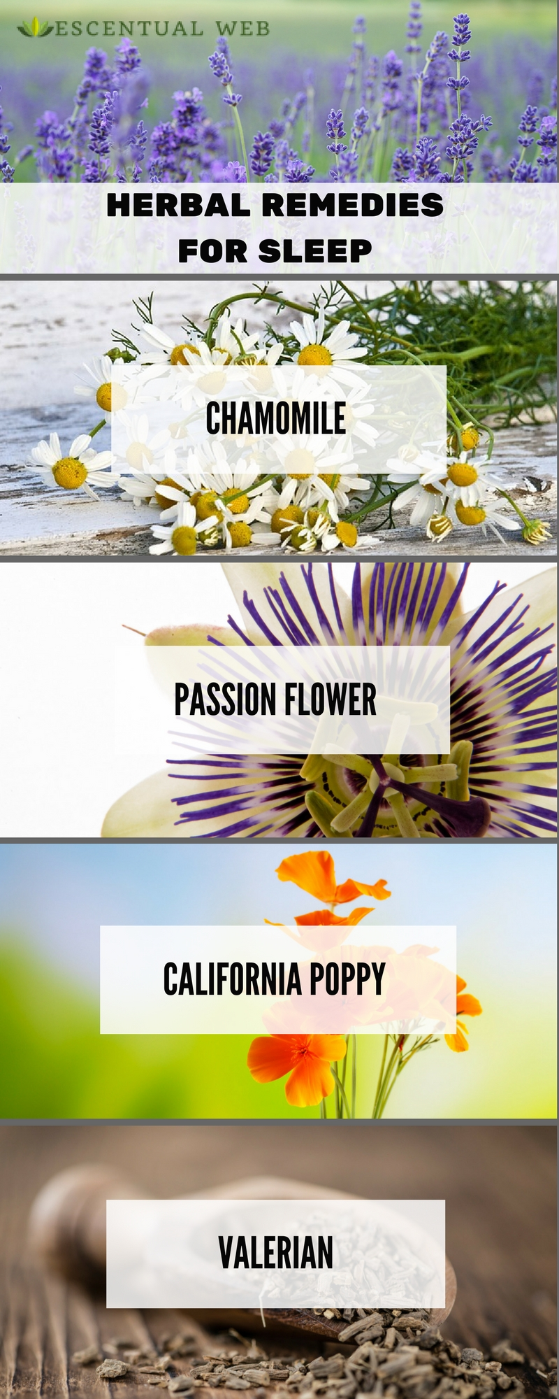 Herbs to use for insomnia