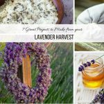 7 Great projects to make with your lavender harvest