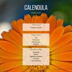 Calendula Herbal Profile