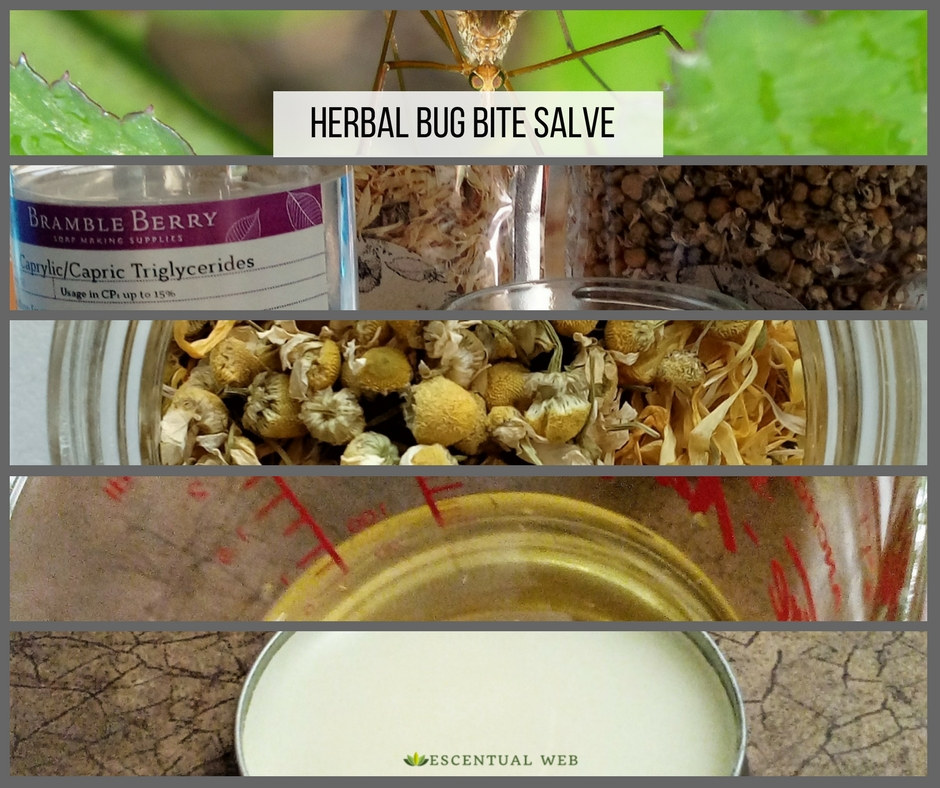 How to make an herbal bug bite salve