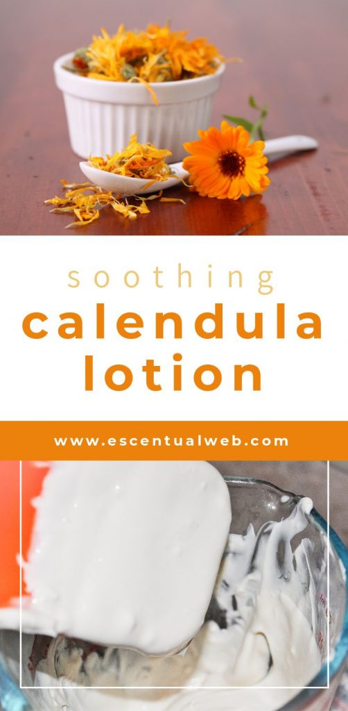 Calendula flowers in a bowl and white lotion on a spatula with text soothing calendula lotion