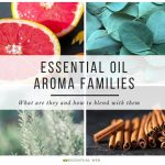 Essential oil aroma families withcollage of grapefruit, eucalyptus, rosemary, cinnamon