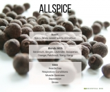 Allspice Essential Oil (Pimenta officinalis)