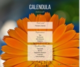 Calendula Herbal Profile (Calendula officinalis)