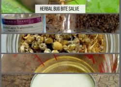 How to Make an Herbal Bug Bite Salve