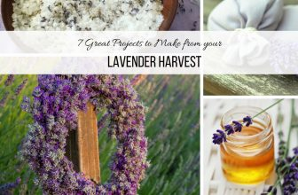 7 Great Projects you can make with your Lavender Harvest