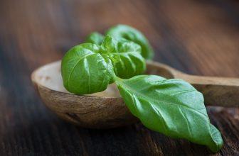 Basil, Sweet (Ocimum basilicum) Essential Oil