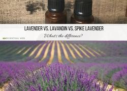 Lavender vs. Lavandin vs. Spike Lavender Essential Oil: What's the difference?