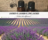 Lavender vs. Lavandin vs. Spike Lavender Essential Oil: What's the difference?